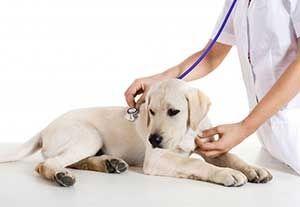 Pet Examination