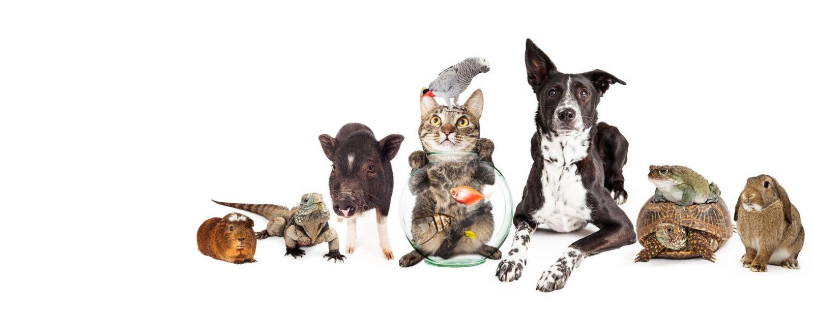 Country Veterinary Clinic - Yuba City Veterinarian