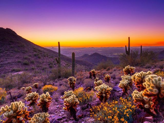 Sunset, mountains, and cacti