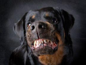 Orlando Dog Bite Lawyer