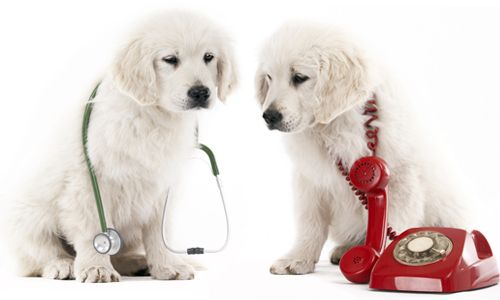 Family Pet Hospital - Request Appointment