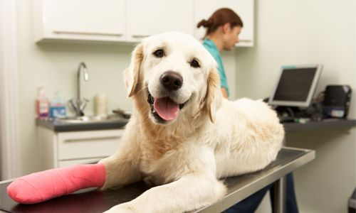 Family Pet Hospital - Services