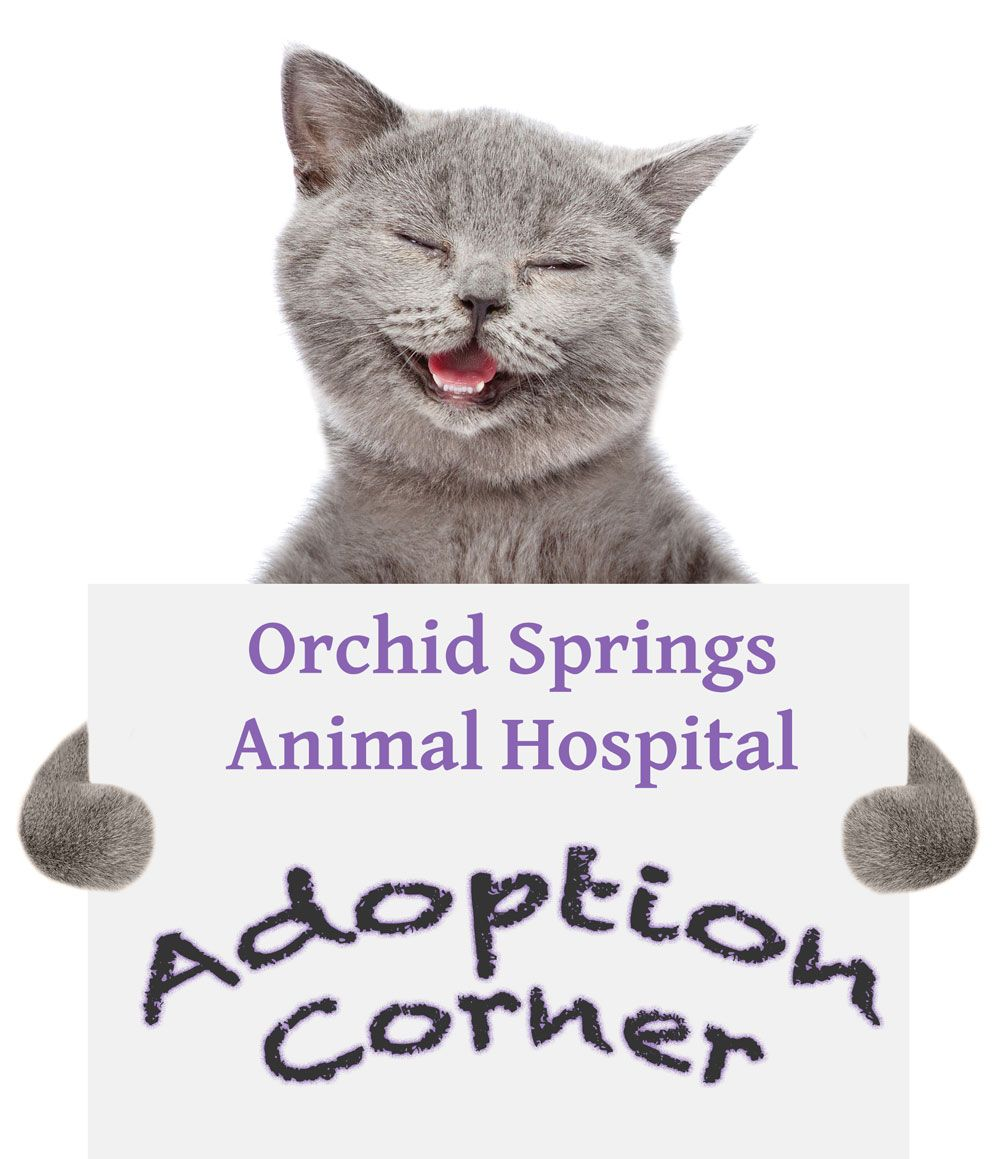 Orchid Spring Animal Hospital Adoptions