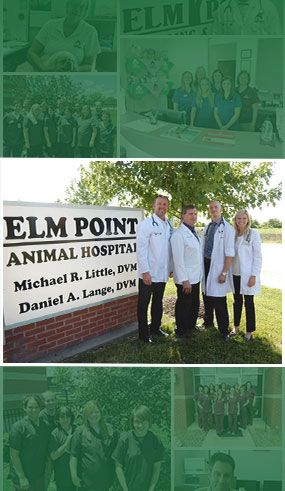 Elm Point Animal Hospital Team