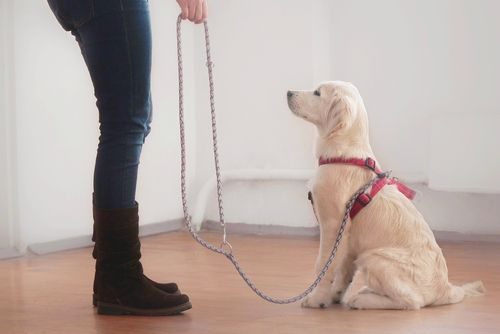 Training Your Pet