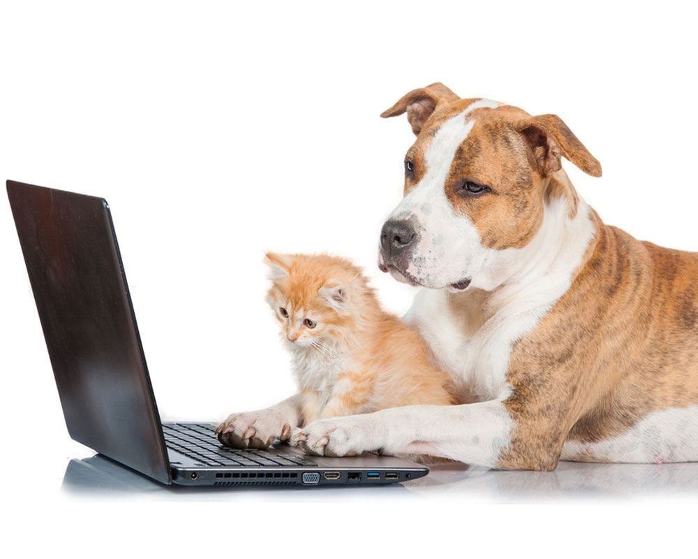 dog and cat on the computer