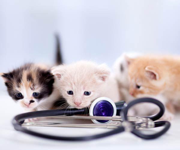 Davies Animal Hospital - Services
