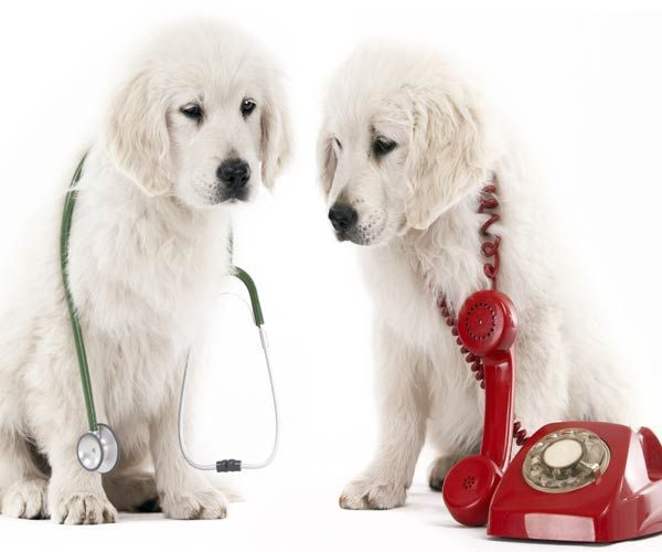 Davies Animal Hospital - Request Appointment
