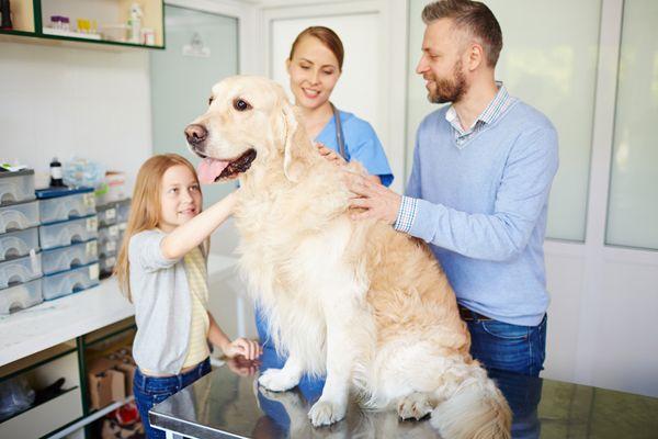veterinarian and dog