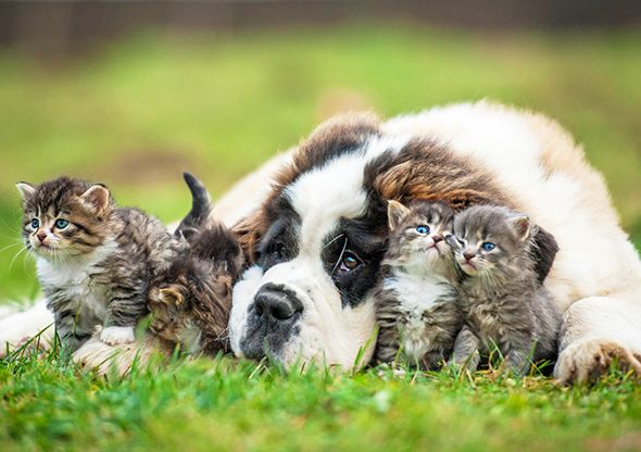 Animal hospital veterinarian services at Petaluma Veterinary Hospital