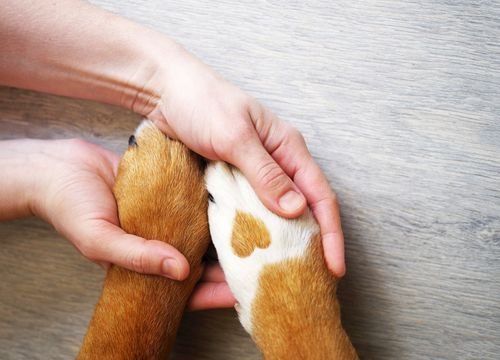 hands holding paws