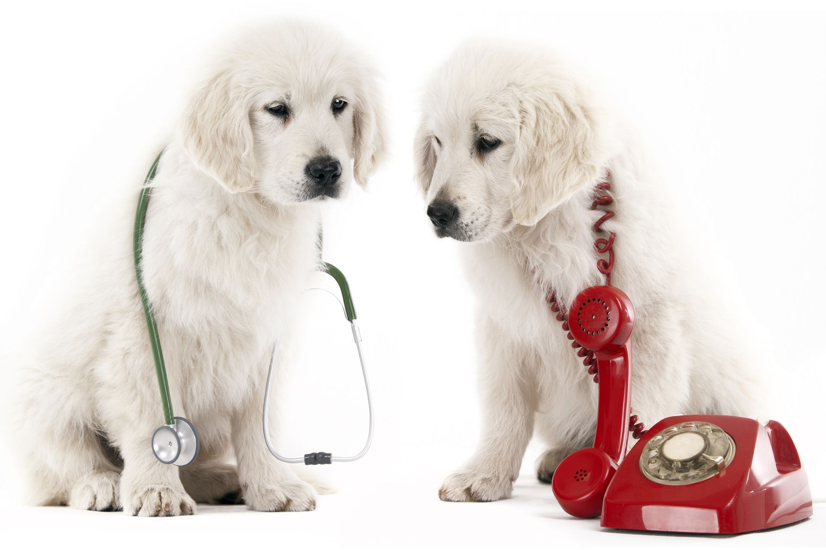 Contact Bar S Animal Clinic
