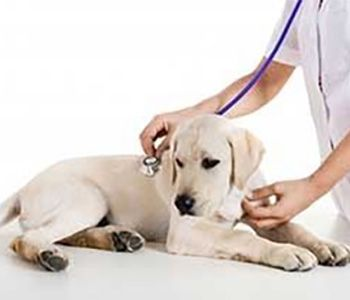 Emergency, Border Animal Hospital