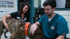 pet hospitalization