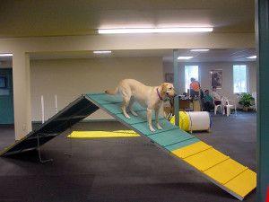 dog training activity