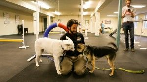 dogs training