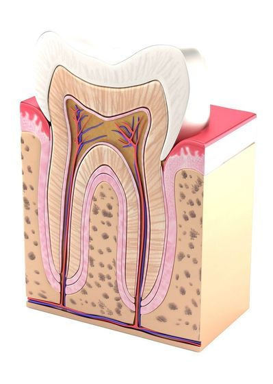 root canal therapy anatomy