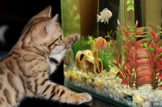 Kitten Packages