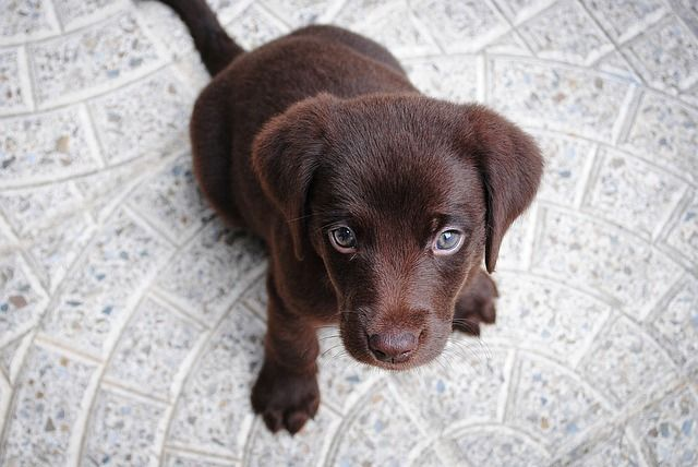 Puppy Packages