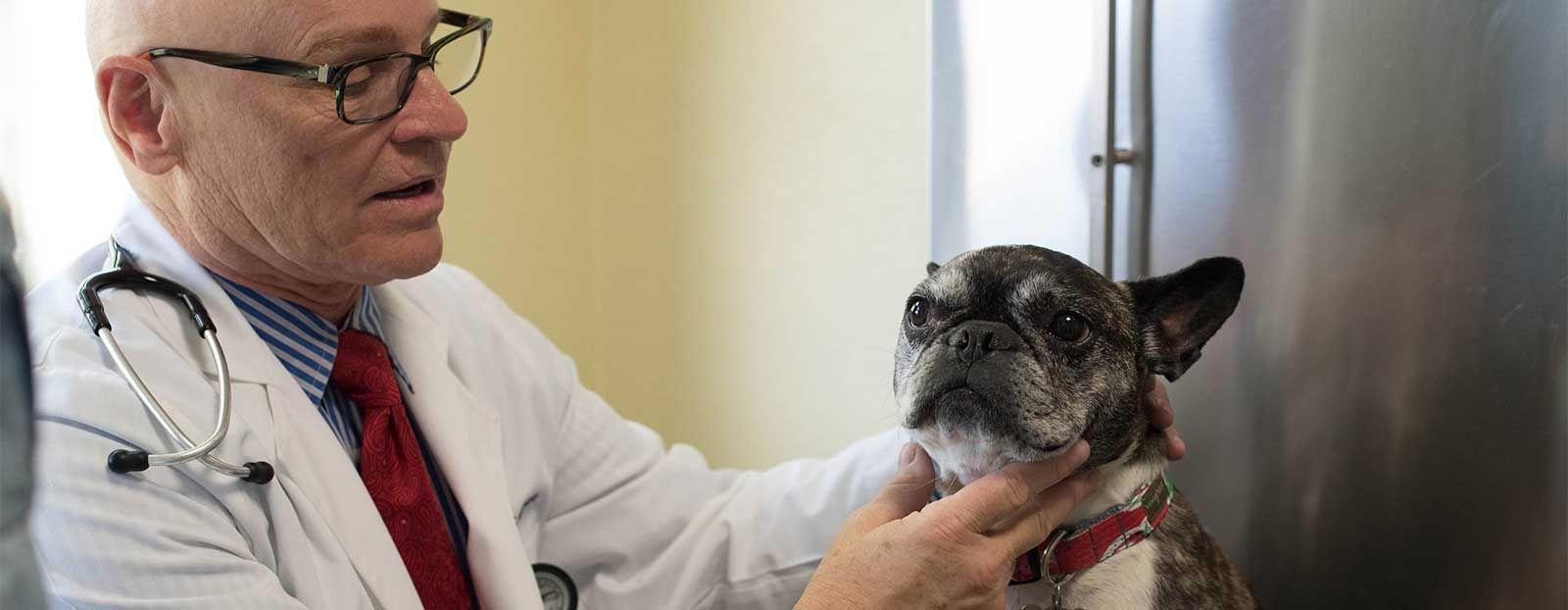 Care Animal Hospital - Joe Alcorn