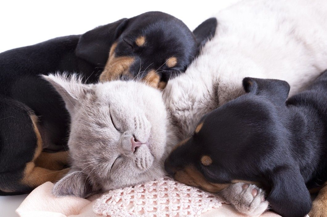 Puppy and Kitten Care