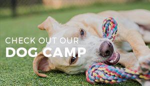 Dog Camp